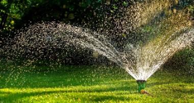 Jak zaaranżować domowy ogród?