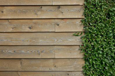 wall-463978_1280