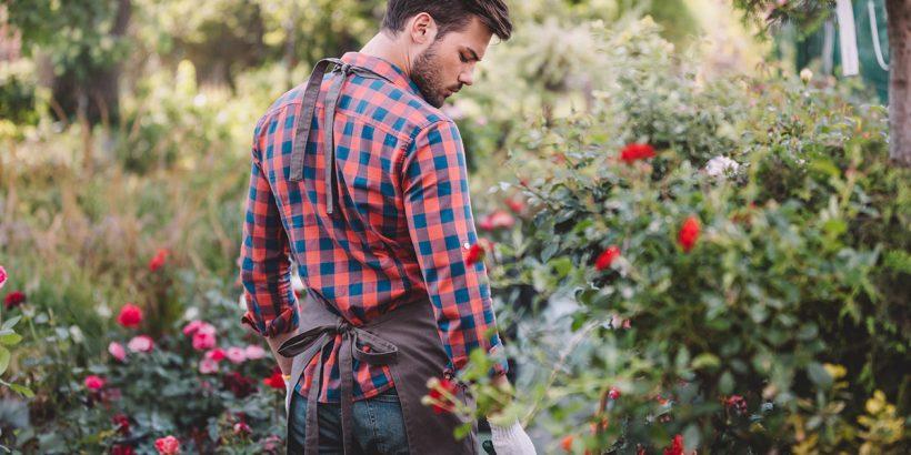 ogrodnik-dba-o-roze-w-lecie